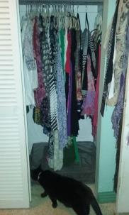 closet cat 1